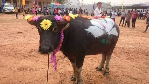 Kế hoạch Lễ hội hoa Ban huyện Vân Hồ năm 2017