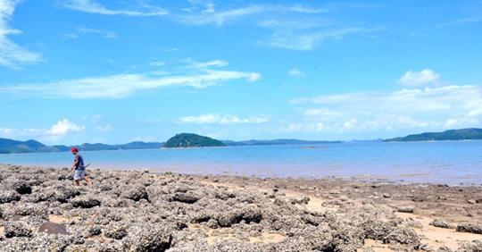 Hòn Gội: Đảo hoang chờ khám phá